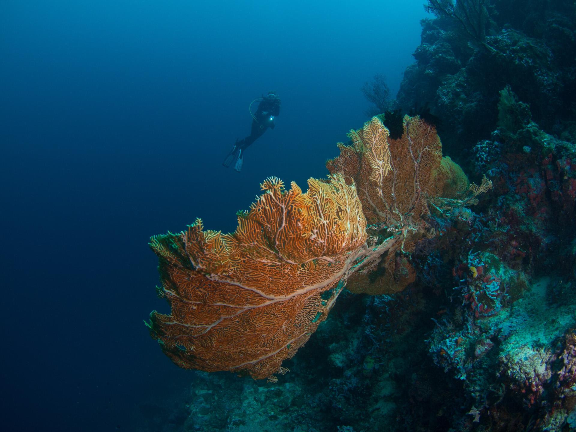 Scuba World Divers Makadi Bay - Fotos auf TaucherNet