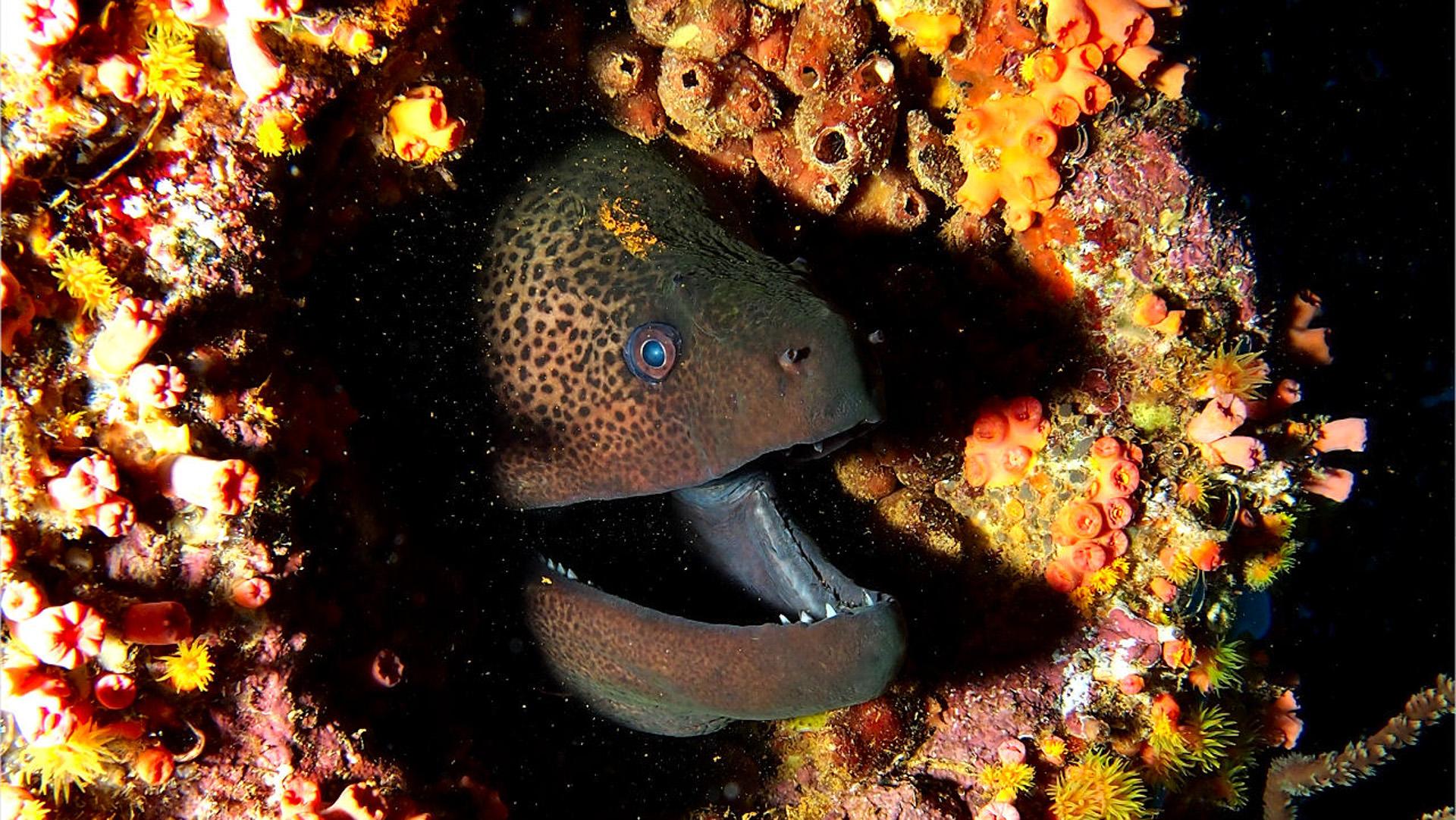mauritius urlaub beste gegend