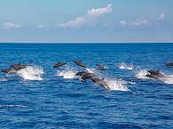 Delphin Tour mit den Celebes Divers Sulawesi