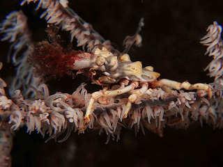 Fundgrube für die Liebhaber von ungewöhnlichen, kleinen Kreaturen