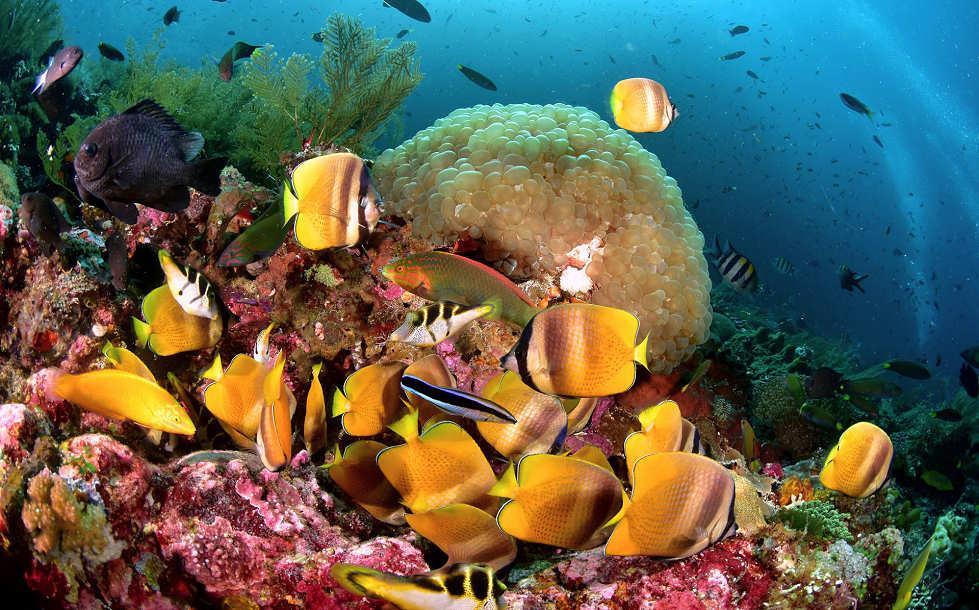 Tauchen mit den Alami Alor Dive Center