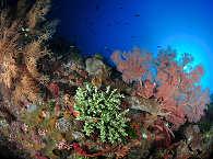 Tauchen in der Pantar Strait, Indonesien