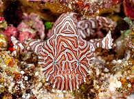 Tauchen Molukken