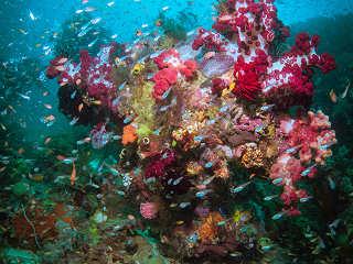 Wunderschöne und bunte Korallengärten – Tauchen in Raja Ampat, Indonesien