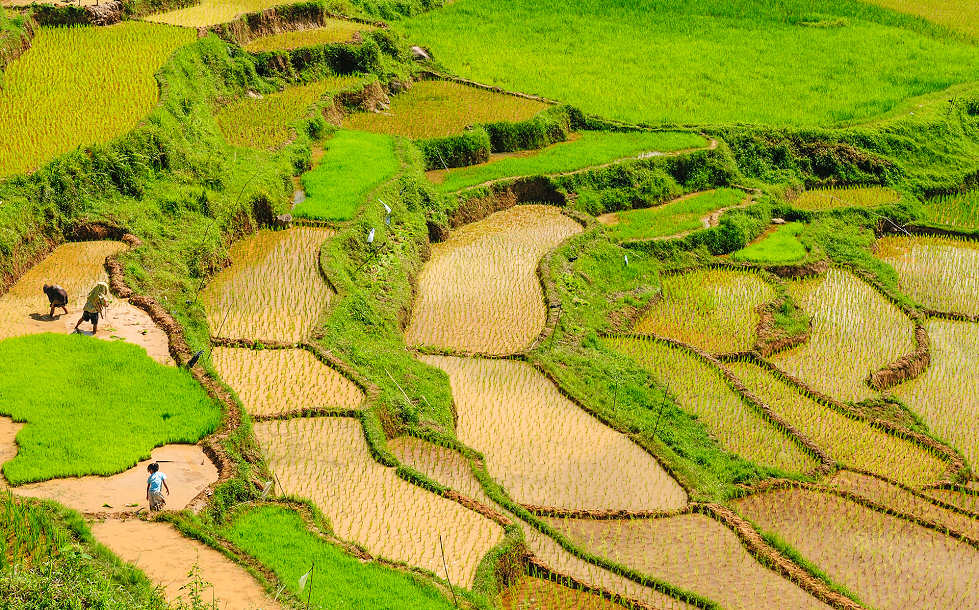 Reisterrassen auf Bali – Indonesien