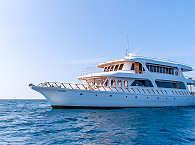 Blue Shark One – Safariboot Malediven