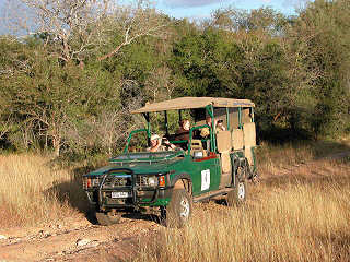 Safaris im Kruger Nationalpark
