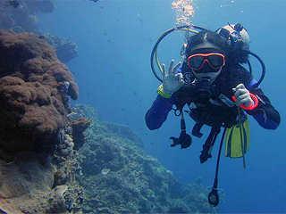 Tauchen mit dem Celebes Divers Sulawesi