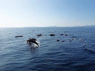 Delfin Tour Sulawesi