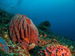 Diving Alor Indonesien – Schatzkammer unter Wasser