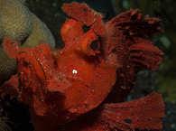 Diving Alor Indonesien
