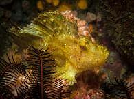 Anilao Diving