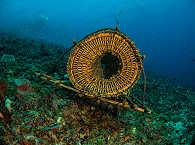 Diving Pantar Indoneisen