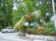 Dolphin Bay Resort – Peleliu