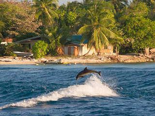 Spielende Delphine – Tiputa Pass, Rangiroa