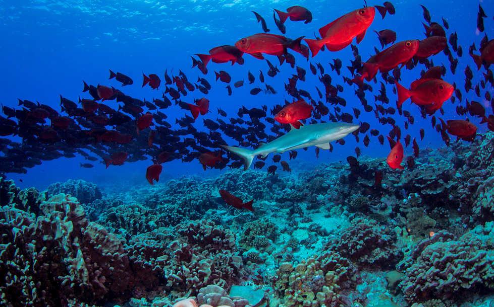 Tauchen im Fakarava-Atoll
