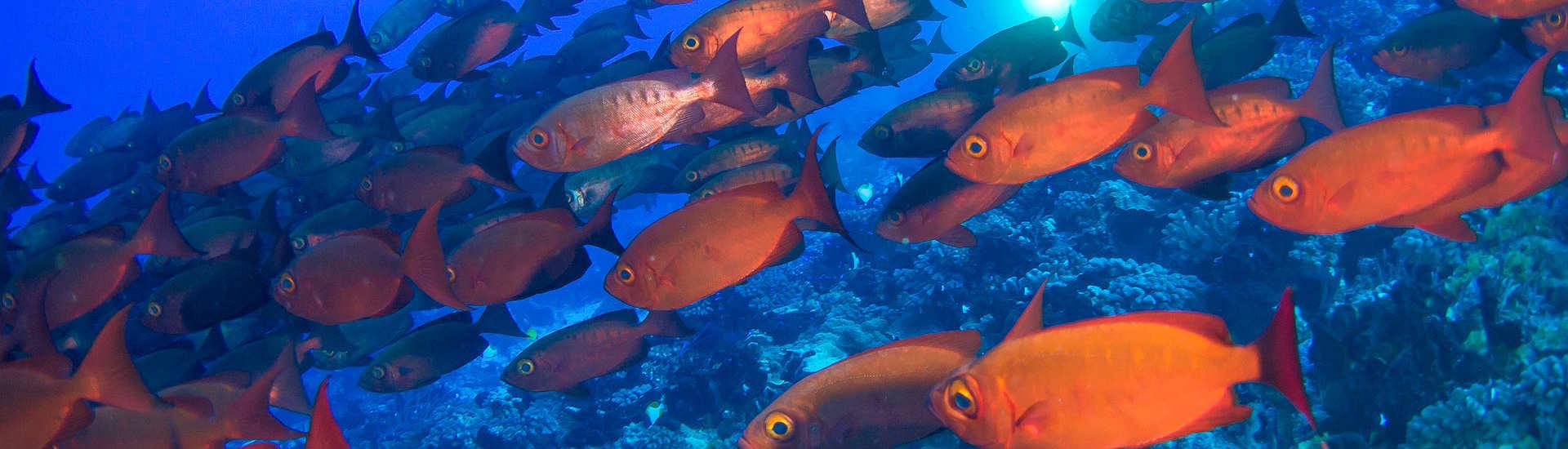 Tauchparadies Französisch Polynesien