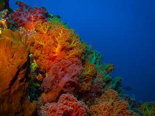 Wunderschöne Korallengärten – Tauchsafaris in Halmahera, Molukken