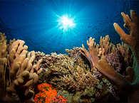 Korallen-Tauchen Sumbawa