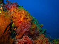Farbenfrohe Korallengärten – Tauchen in Molukken