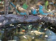 Vogelparadies Kruger Nationalpark – Südafrika