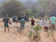 Safari Wanderung im Kruger Nationalpark – Südafrika