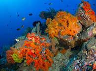 Lembeh-Strait Diving