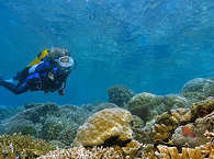 Tauchen um Manado – Nord Sulawesi