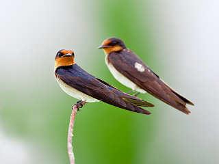 Vogelbeobachtungen Minahasa Highlands