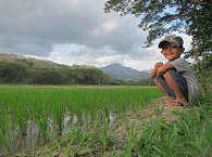 Reisterrasse in den Bergen Mindoros – Baco Nationalpark