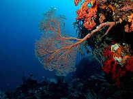 Wunderschöne Korallen – Tauchen in Molukken