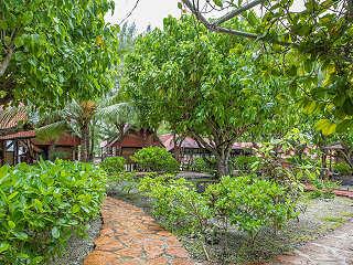 Garten im Inneren des Motu Aito in Fakarava
