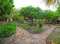 Garten des Motu Aito in Fakarava