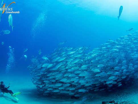 Tauchen im Großfisch El Dorado Socorro