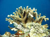 Korallengärten in Bohol – Philippinen