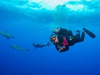 Tauchreisen nach Franz. Polynesien – Haitauchen