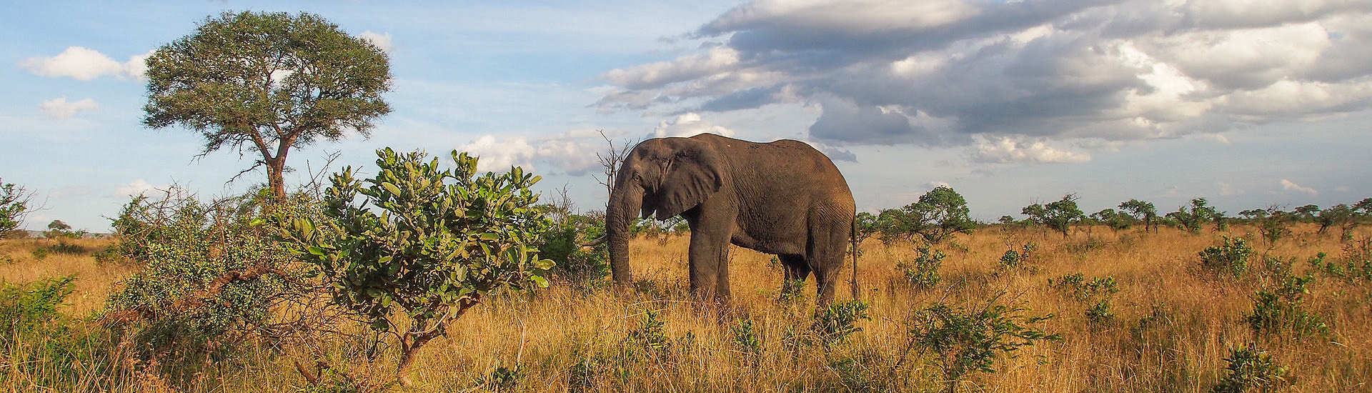 Safaris im Kruger Nationalpark – Elefant