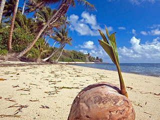Strand auf Yap