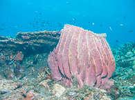 Wunderschöne Korallengärten – Tauchbasis Kubu Indah, Bali