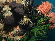 Farbenfrohe Korallengärten – Sangat Island Resort