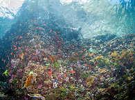 Tauchen an gesunden Riffen