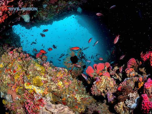 Tauchen Ambon, Molukken