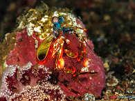 Critter in den Molukken