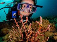 Tauchen Molukken, Indonesien