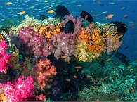 Raja Ampats Korallenwelt