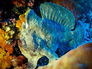 Tauchen Moalboal – Cebu Philippinen