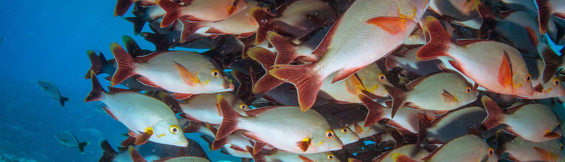 Tauchen im Fakarava Atoll – Französisch Polynesien