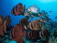 Schwarmfisch in Raja Ampat – Dampier Strait, Indonesien