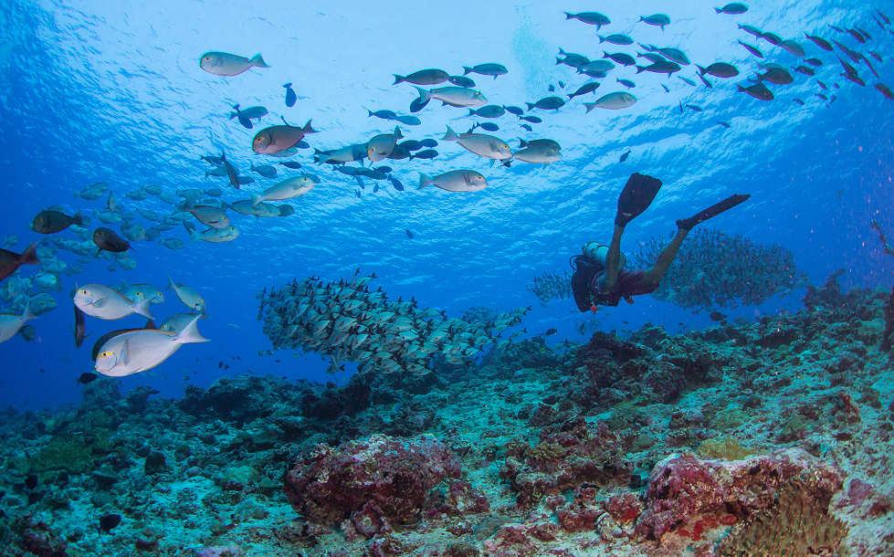 Malediven – Unterwasserwelt mit vielen Gesichtern