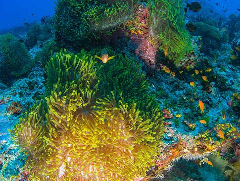 wiedererblühte Korallen – Tauchen in den Malediven